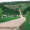 Simulation domaine viticole Bourgogne 2