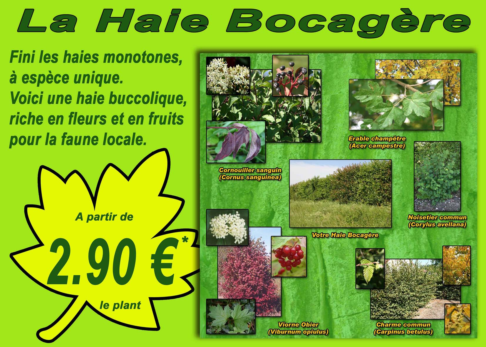 haie bocagere concept nature