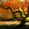 jardin japonais sur la côte de Beaune, japenese garden
