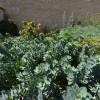 association végétale dans un massif de fleur