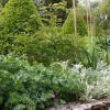jardin à la française et plante vivace associée