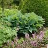 création de massif fleurie réussie dans un jardin