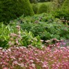 conception de jardin avec des plantes vivaces