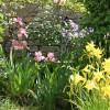 massif de fleur de printemps