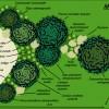 exemple de schéma de plantation pour jardin et massif