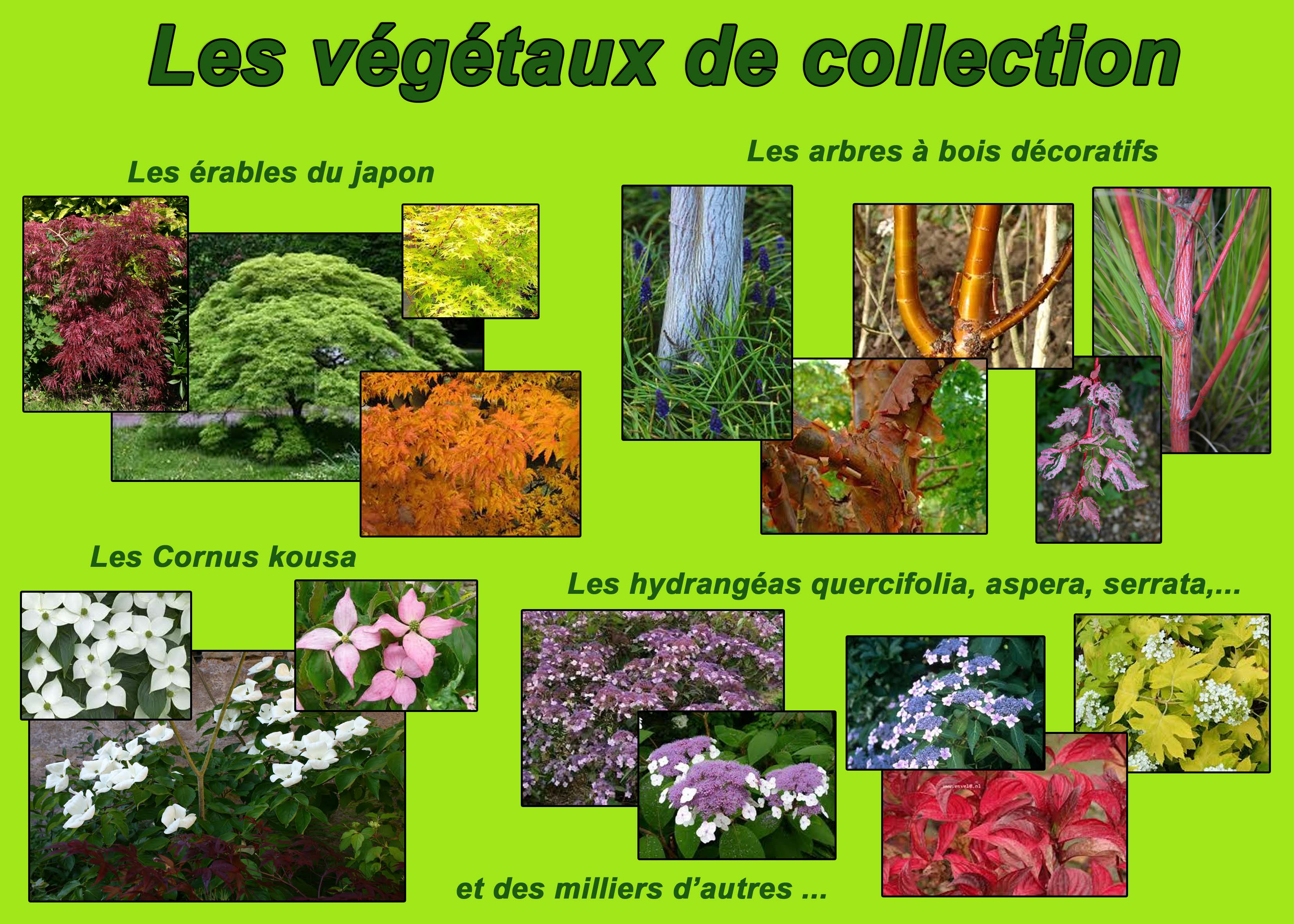 Vegetaux-collection